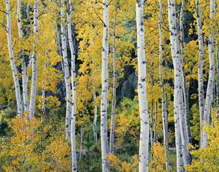 The Ansel Adams Gallery Online Store